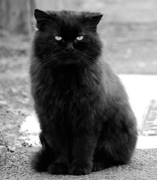 Записки на обоях. Дневник кота Василия.