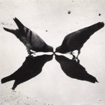 Trafalgar Square Pigeons, London, 1949 г. © Ernst Haas.